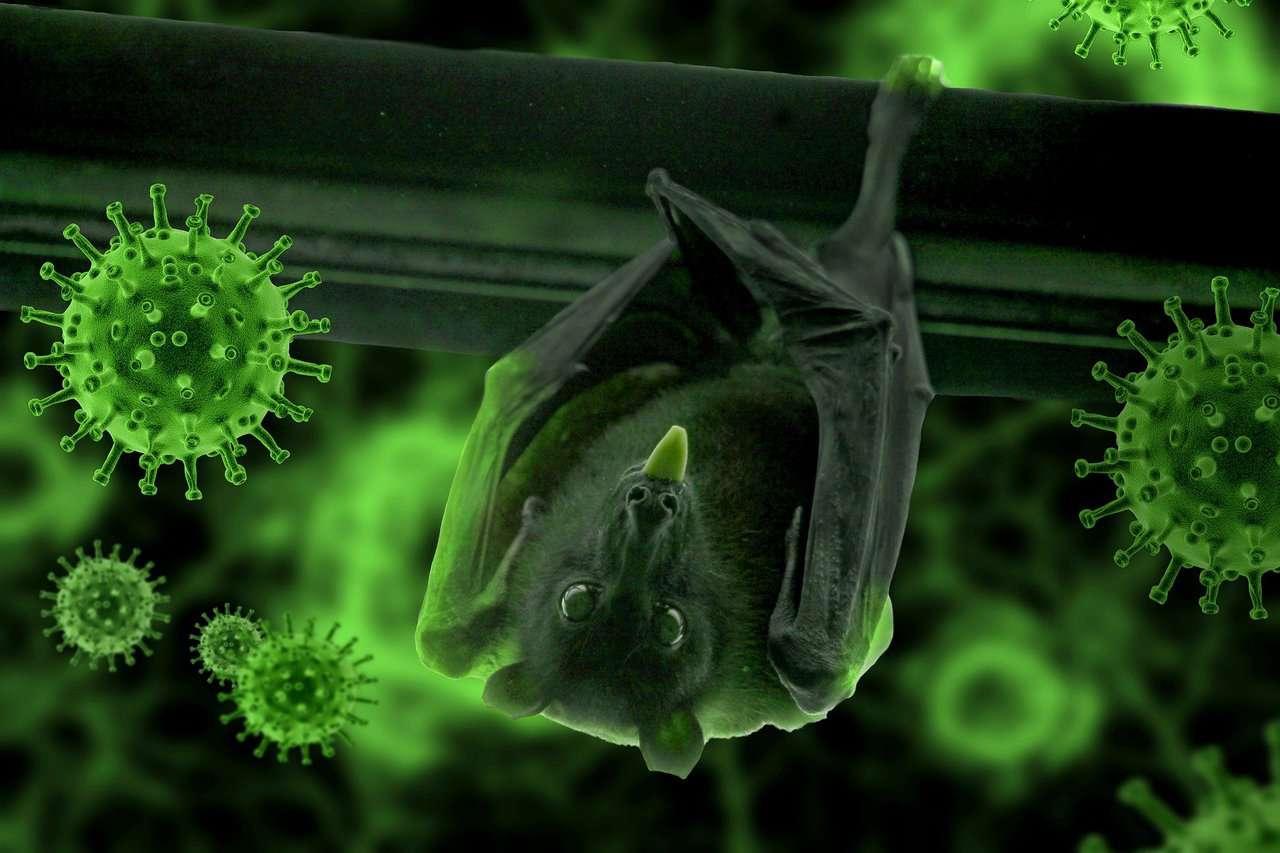 Investigación sobre orígen de la pandemia