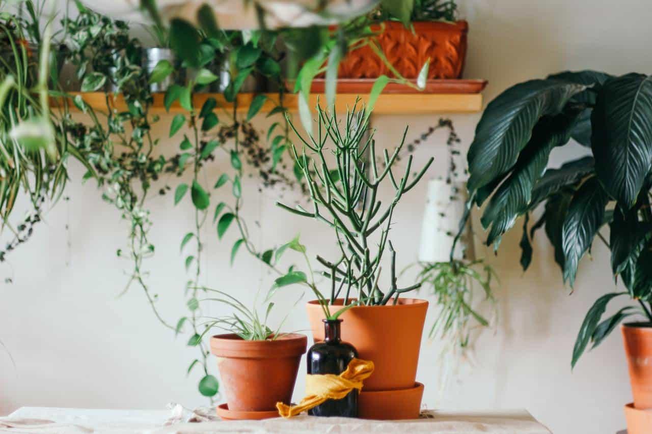 La Comunicación entre las plantas