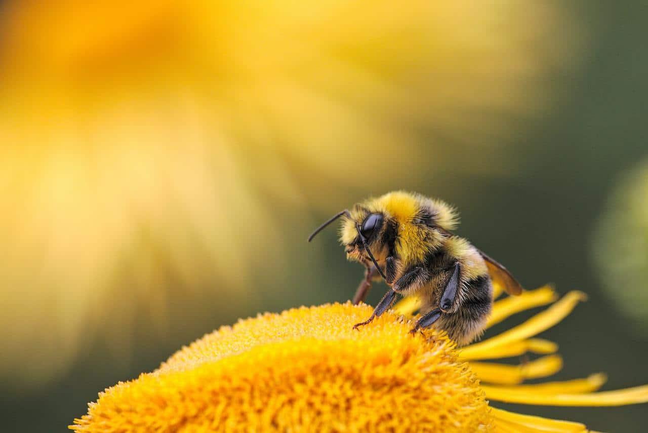 Biomimética: cómo inspirarse en la naturaleza