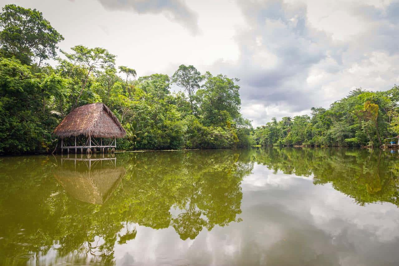 Confirman que la cepa amazónica puede reinfectar y tiene poder duplicado