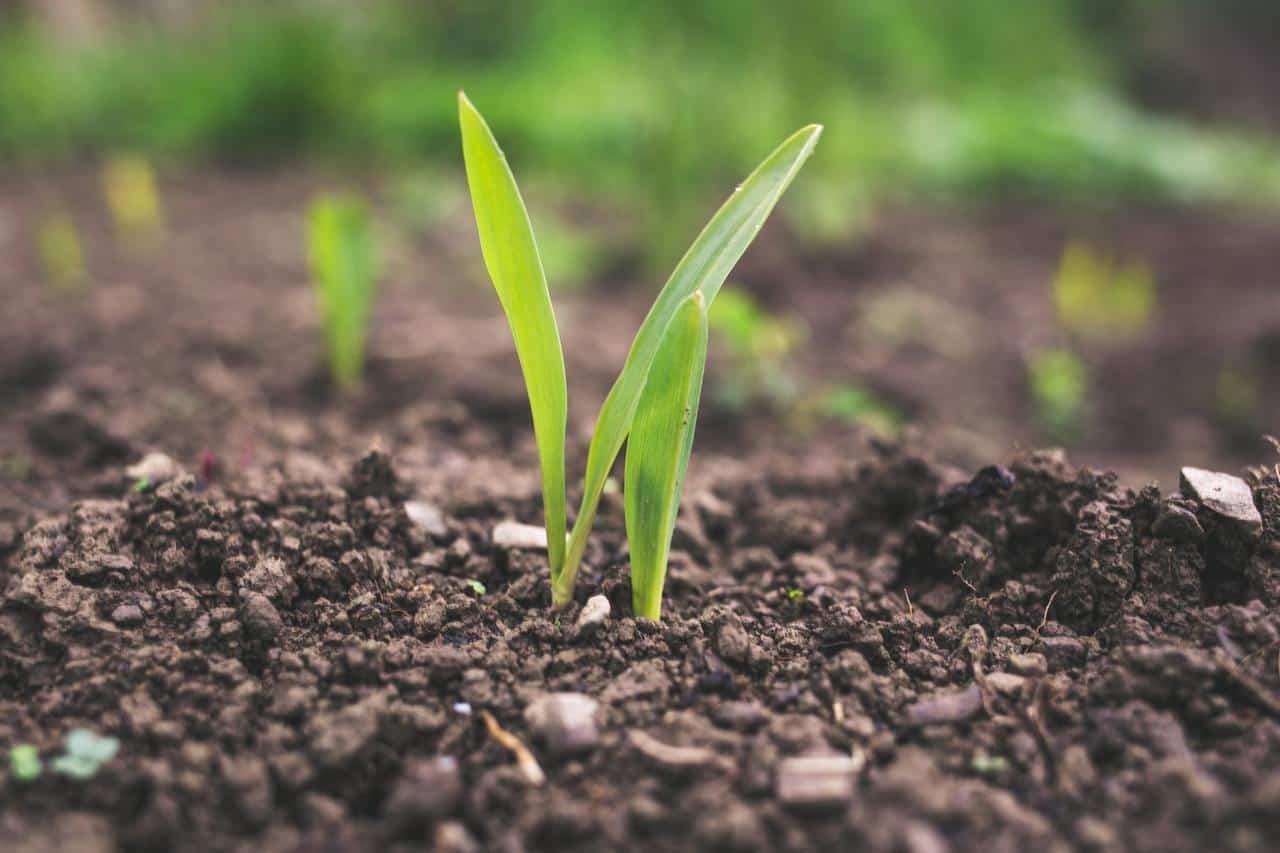 Bioinsumos: hacia una agricultura cada vez más sustentable