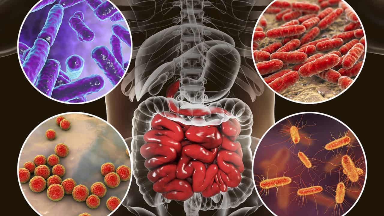 Las bacterias intestinales serán los medicamentos del futuro